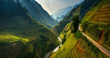 vietnam rice terraces - Brightlines Translation